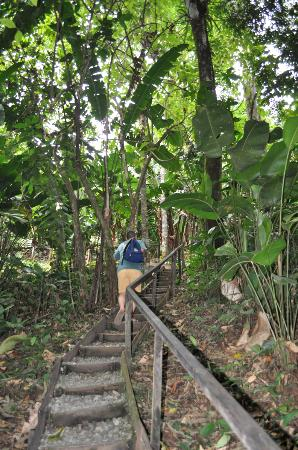 La Loma Jungle Lodge and Chocolate Farm: Hike to the cabin