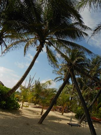 Playa Selva: View from the house