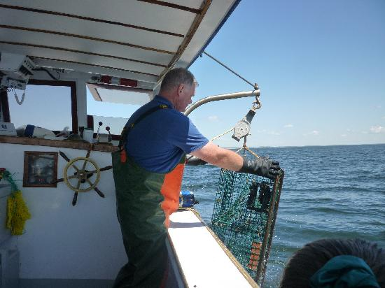Finestkind Scenic Cruises: hawling in the lobster pot