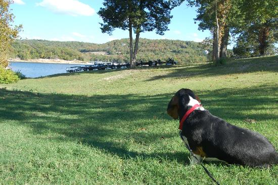White Wing Resort: Dog enjoying the view