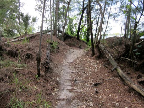 Bike Trails Picture Of Amelia Earhart Park Hialeah