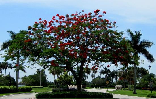 Amelia Earhart Park: Miami