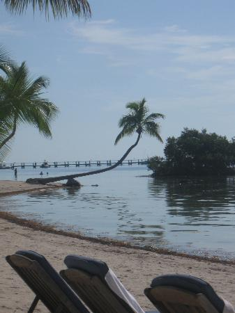 The Moorings Village and Spa: Beautiful palm tree on beach