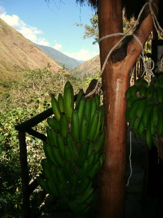 Eco Quechua Lodge: One of the Views / Una de las vistas
