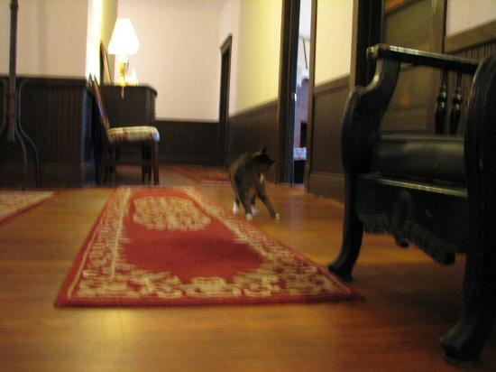 Riverview Hotel: Hotel kitty cat may greet you at the top of the stairs