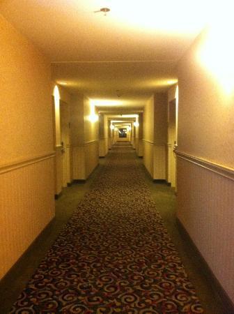 Holiday Inn Express Kelowna: hallway to rooms