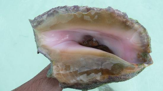 Playa Sirena: caracol