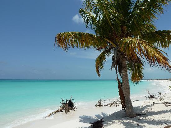 Playa Sirena: palmera