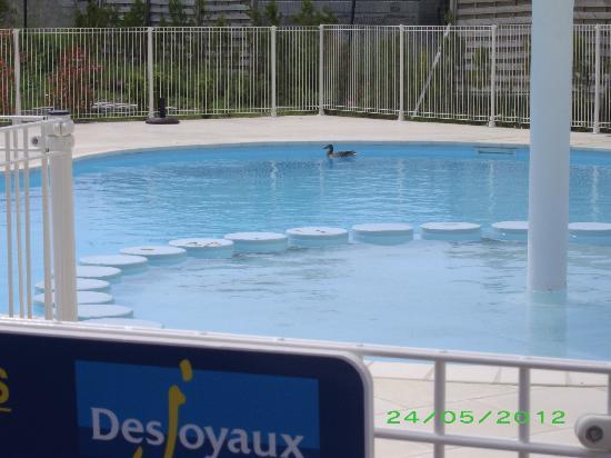 L'Oustau De Sorgue : Piscine fermée les 4/5 de notre séjour réservée aux canards