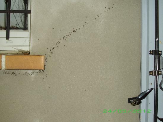 L'Oustau De Sorgue : Invasion de fourmis noires