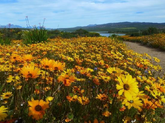 Ocean View House: Flower season in Namaqualand