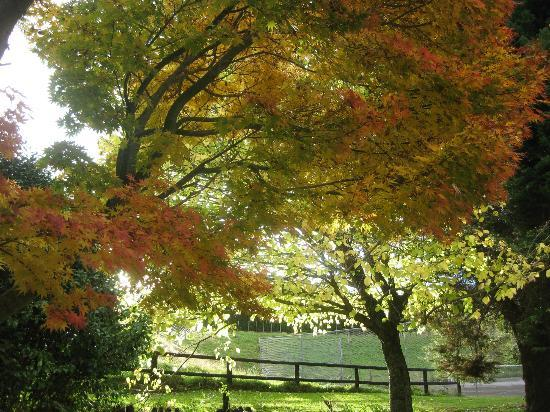 Hamurana Lodge: Autumn is a great time to visit
