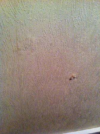 The Ashley Hotel : Holes in walls from old fixtures
