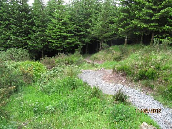 Ballyhoura Walking Trails : Twin Peaks -great fun
