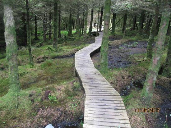 Ballyhoura Walking Trails : remeber it is not a video game :)
