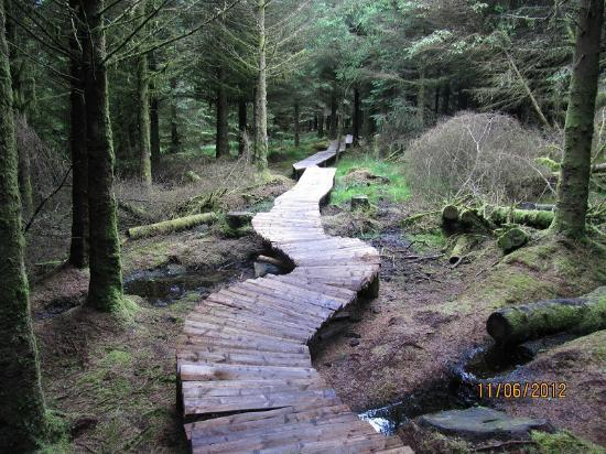 Ballyhoura Walking Trails : be careful when is wet.... and when is not :P