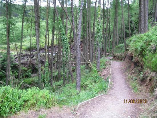 Ballyhoura Walking Trails : another atraction