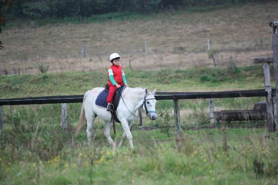 Cedar Glen Farmstay : Horse riding
