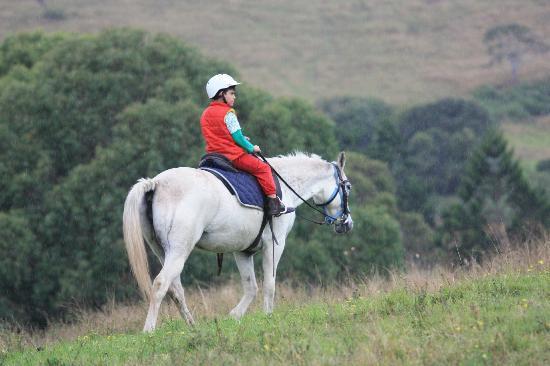 Cedar Glen Farmstay : riding