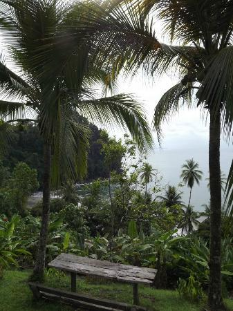 Campanario Biological Station: view from the Hammock area