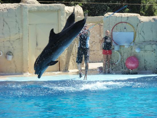 Grand Haber Hotel : delfinshow