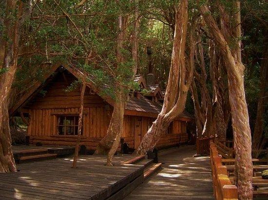 Disney's Cabin
