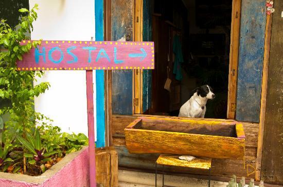 El Jardín de Frida: Frida
