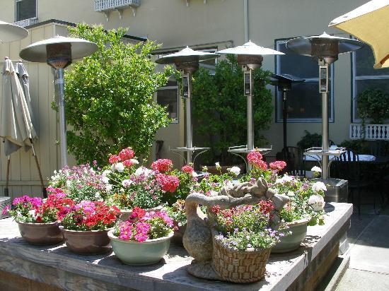 Calistoga Inn: Spring Plantings