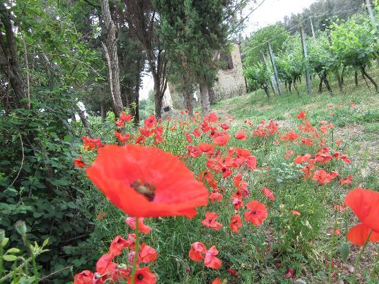 Agriturismo Fonte Martino: Gardenview