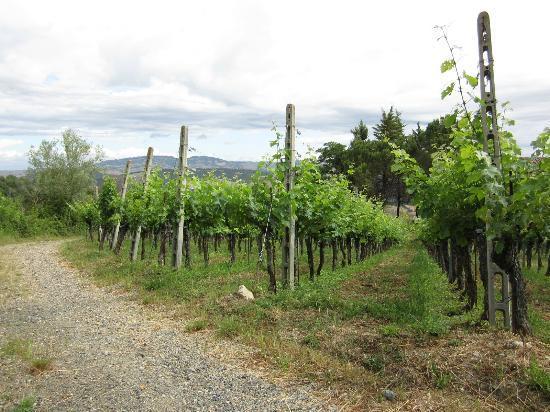 Agriturismo Fonte Martino: Vineyard