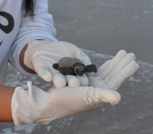 Sea Turtle, Inc.: how cute!