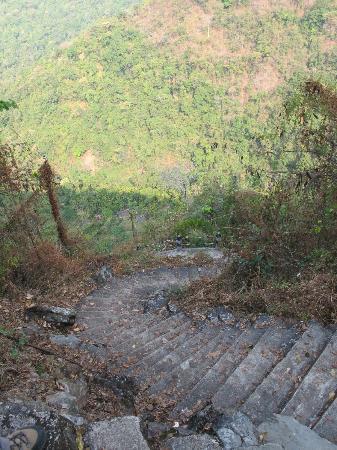 Roots Bridges: Lots of steps!