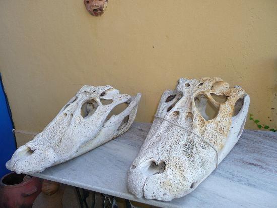 Chez les Rois: Les crocodils