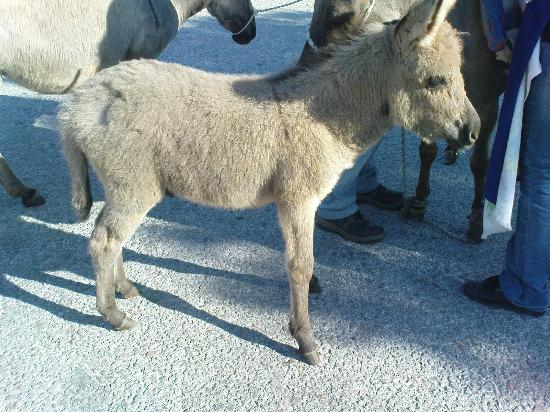 Vigla Hotel: Cute, young donkey in the village