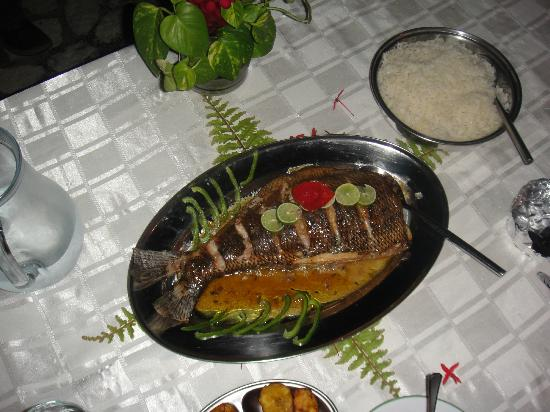 The Resort at Wilks Bay: Snapper for dinner!!  Tastes even better than it looks.