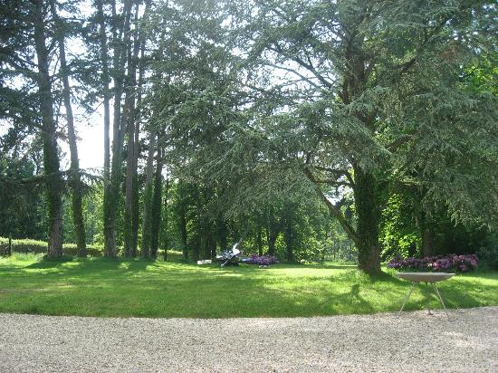 Chateau de la Resle: the forest