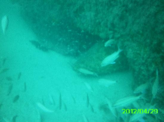 Tanks-A-Lot Dive Charters: Goliath Grouper @ Airplane Barge