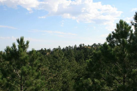 Chadron State Park : Forested Area