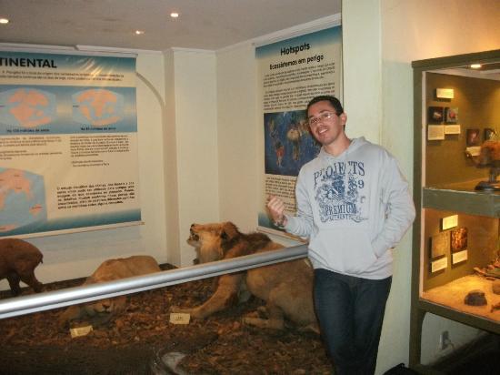 Campinas, SP: Dentro do museu, na sala dos felinos.