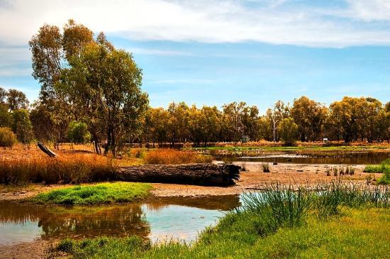 Narrandera Wetlands Picture Of Narrandera New South