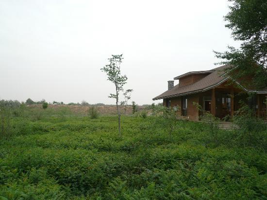 Jinsha Island Leisure Villa Resort: hotel grounds by the desert oasis