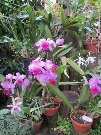 Berggarten: Orchidenhaus