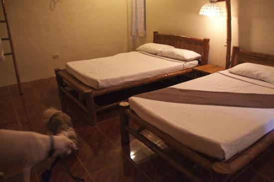 La Luz Beach Resort & Spa: Pets are allowed only in Premiere room