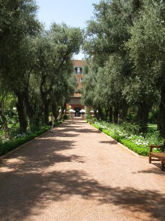 La Mamounia: Path to the cafe.