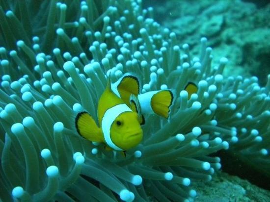 Nika Island Resort & Spa : arrecife y memo