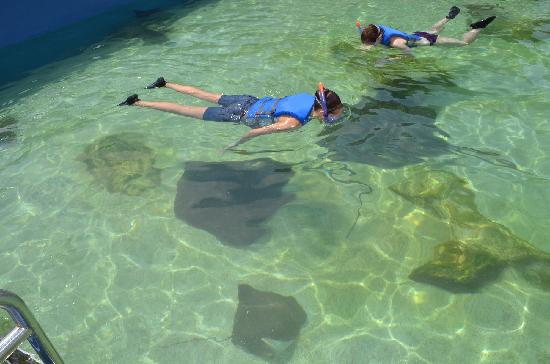 Gulfarium Marine Adventure Park: Stingray Bay Snorkel
