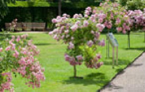 Lee Valley Regional Park: Discover the stunning Myddelton House Gardens