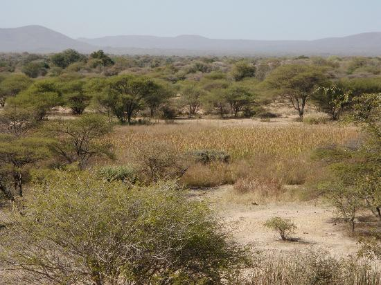 Mokolodi Nature Reserve : Landscape