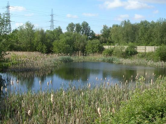 Lee Valley Regional Park: Discover our nature reserves