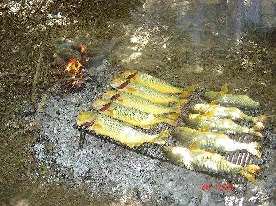 Cayastá, Argentina: La pesca del dia.